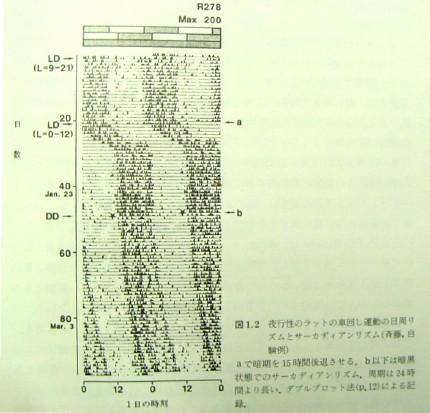 03_aday_biologicalclock_01.JPG