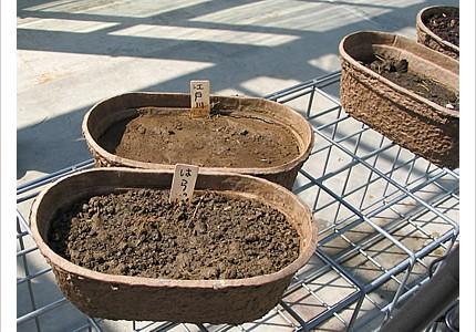04_soil_08.jpg