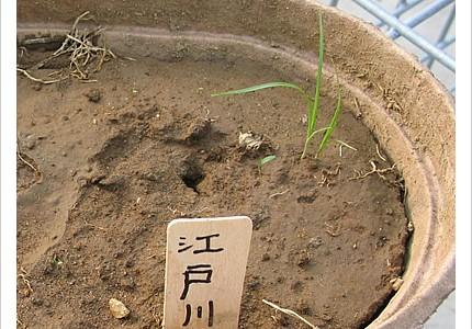 04_soil_12.jpg