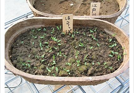04_soil_13.jpg