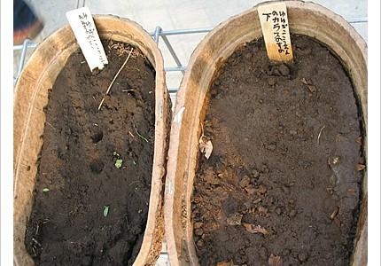 04_soil_15.jpg